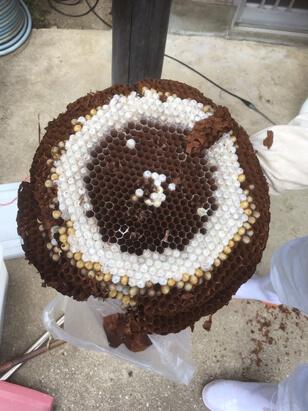 空き家管理でハチの巣除去2